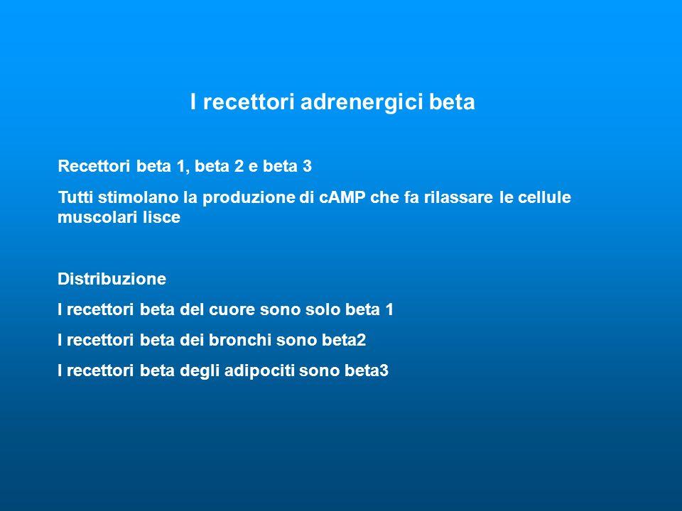 I recettori adrenergici beta Recettori beta 1, beta 2 e beta 3 Tutti stimolano la produzione di cAMP che fa rilassare le cellule muscolari lisce Distribuzione I recettori beta del cuore sono solo beta 1 I recettori beta dei bronchi sono beta2 I recettori beta degli adipociti sono beta3