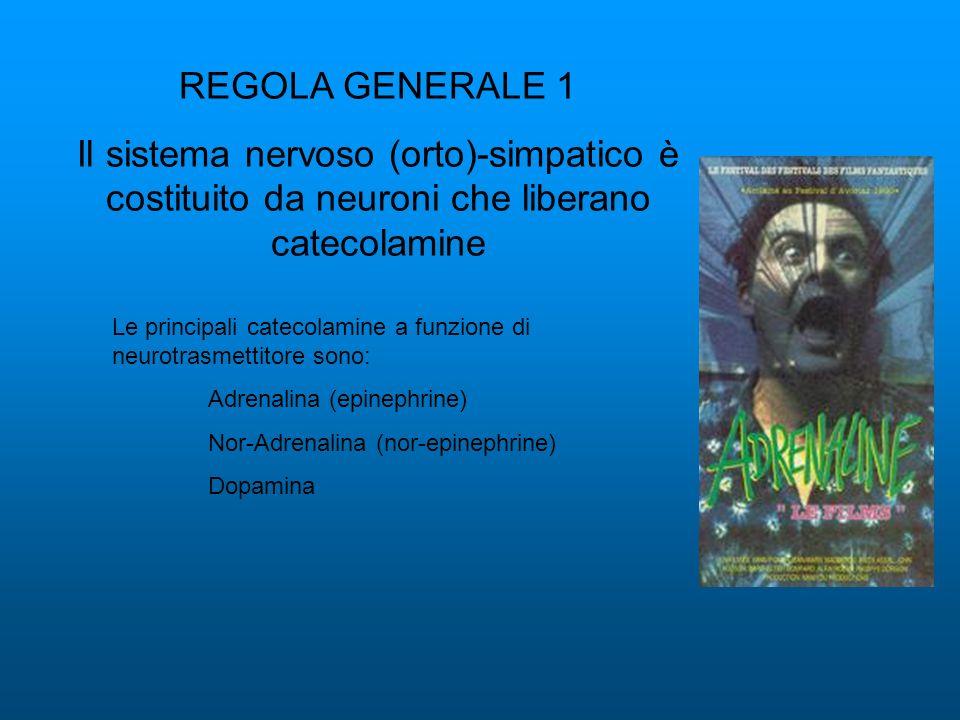 REGOLA GENERALE 1 Il sistema nervoso (orto)-simpatico è costituito da neuroni che liberano catecolamine Le principali catecolamine a funzione di neuro