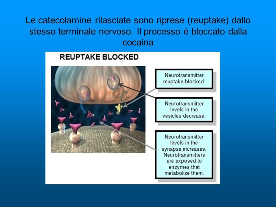Le catecolamine rilasciate sono riprese (reuptake) dallo stesso terminale nervoso. Il processo è bloccato dalla cocaina