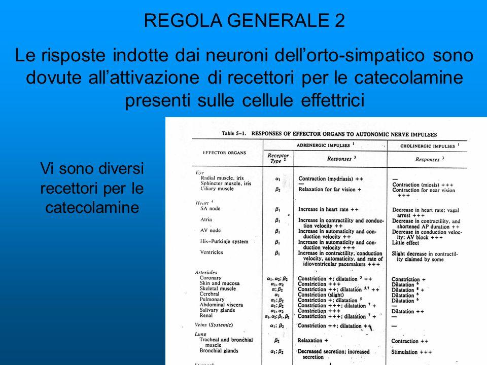 REGOLA GENERALE 2 Le risposte indotte dai neuroni dellorto-simpatico sono dovute allattivazione di recettori per le catecolamine presenti sulle cellule effettrici Vi sono diversi recettori per le catecolamine