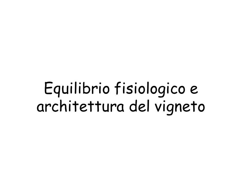 Equilibrio fisiologico e architettura del vigneto