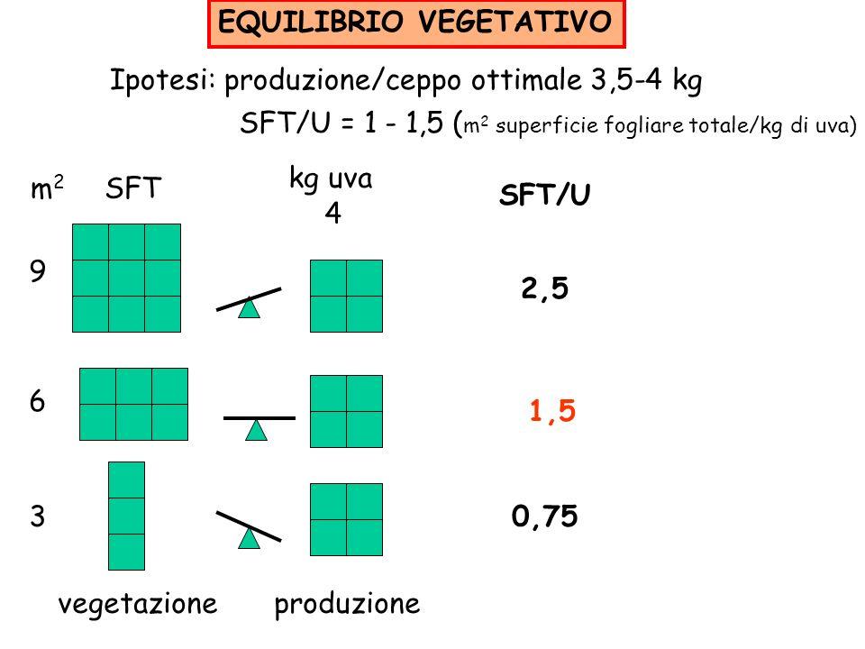 EQUILIBRIO VEGETATIVO Ipotesi: produzione/ceppo ottimale 3,5-4 kg SFT/U = 1 - 1,5 ( m 2 superficie fogliare totale/kg di uva) m 2 SFT 9 6 3 kg uva 4 S