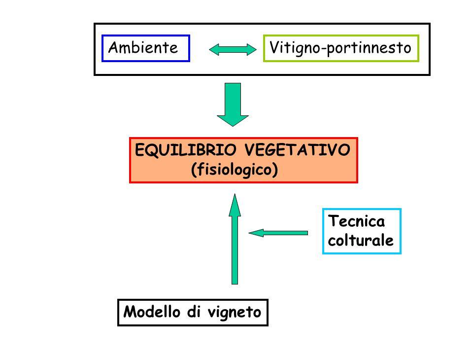 AmbienteVitigno-portinnesto EQUILIBRIO VEGETATIVO (fisiologico) Modello di vigneto Tecnica colturale