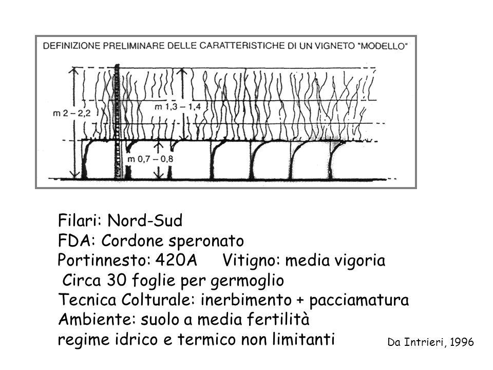 Filari: Nord-Sud FDA: Cordone speronato Portinnesto: 420A Vitigno: media vigoria Circa 30 foglie per germoglio Tecnica Colturale: inerbimento + paccia
