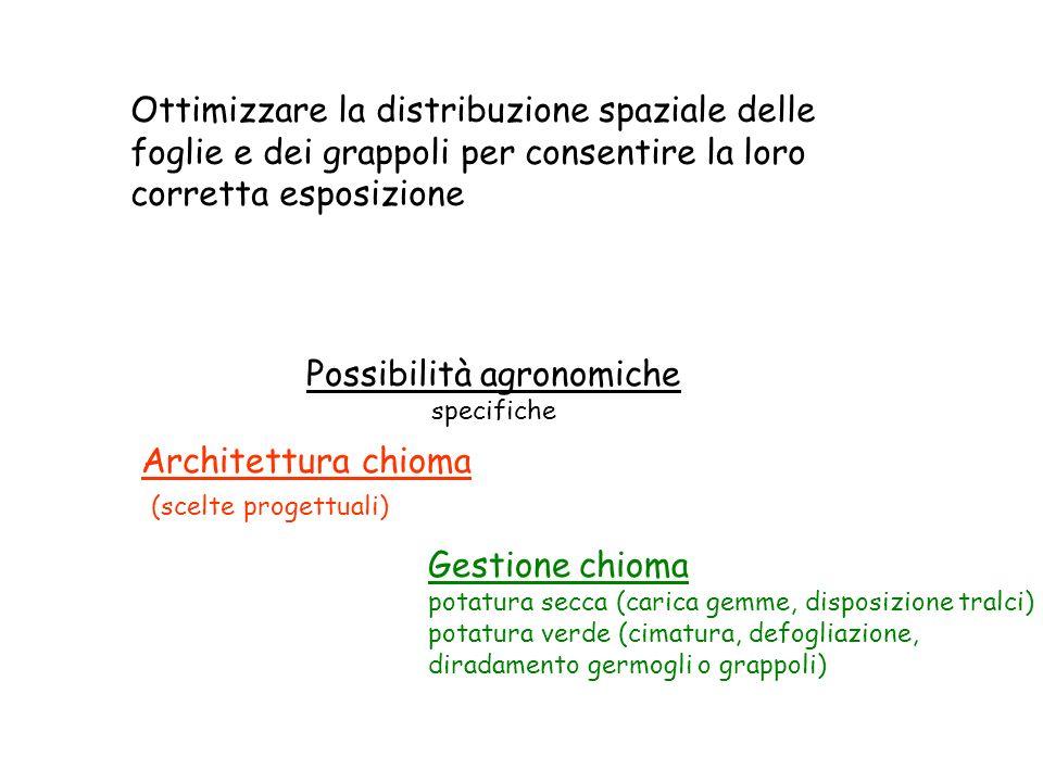 Ottimizzare la distribuzione spaziale delle foglie e dei grappoli per consentire la loro corretta esposizione Architettura chioma (scelte progettuali)