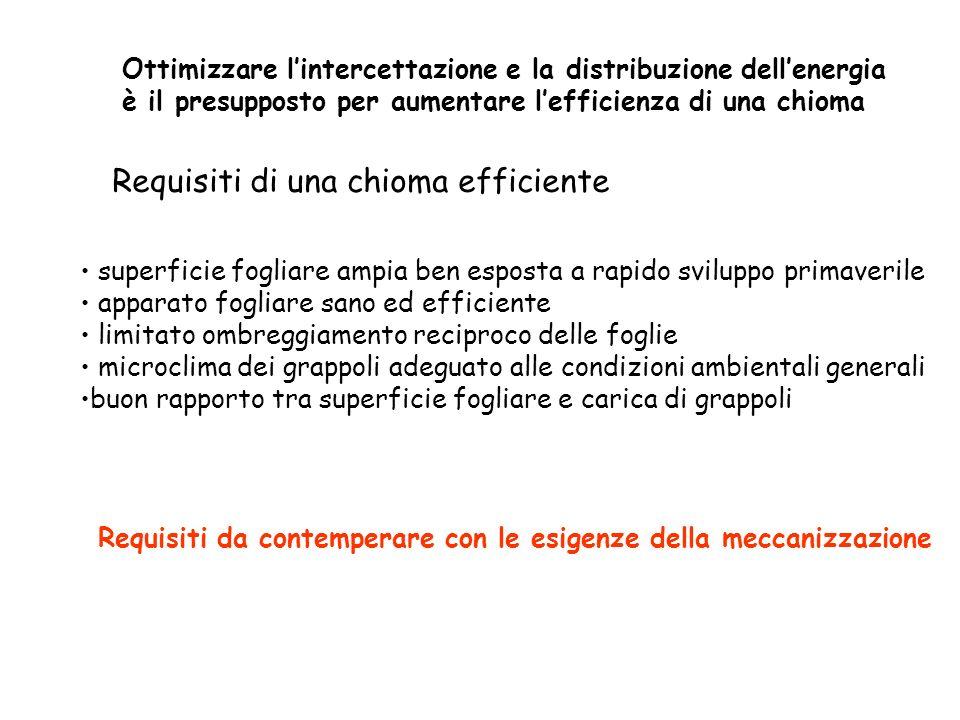 Indici di efficienza (riferiti al ceppo) SFT/SFE 1,5 - 2,5 Rapporto tra superficie fogliare totale e superficie esposta: Rapporto tra superficie fogliare totale (m2) e uva prodotta (kg) SFT/U 1 - 1,5 Rapporto tra uva prodotta (kg) e massa legno di potatura (kg) U/L 8 - 12 Indice di Ravaz