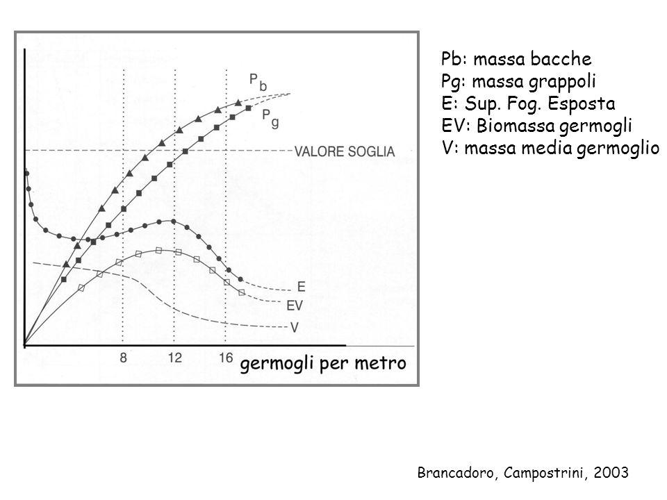 Pb: massa bacche Pg: massa grappoli E: Sup. Fog. Esposta EV: Biomassa germogli V: massa media germoglio Brancadoro, Campostrini, 2003