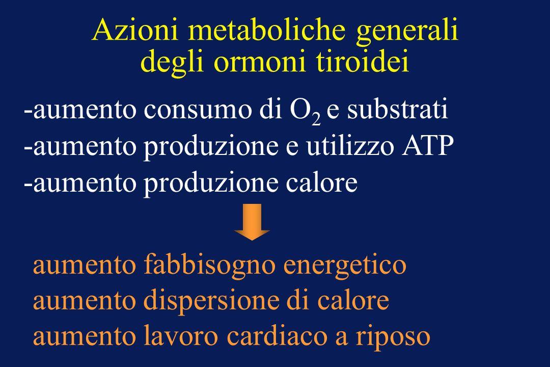 Azioni metaboliche generali degli ormoni tiroidei -aumento consumo di O 2 e substrati -aumento produzione e utilizzo ATP -aumento produzione calore aumento fabbisogno energetico aumento dispersione di calore aumento lavoro cardiaco a riposo