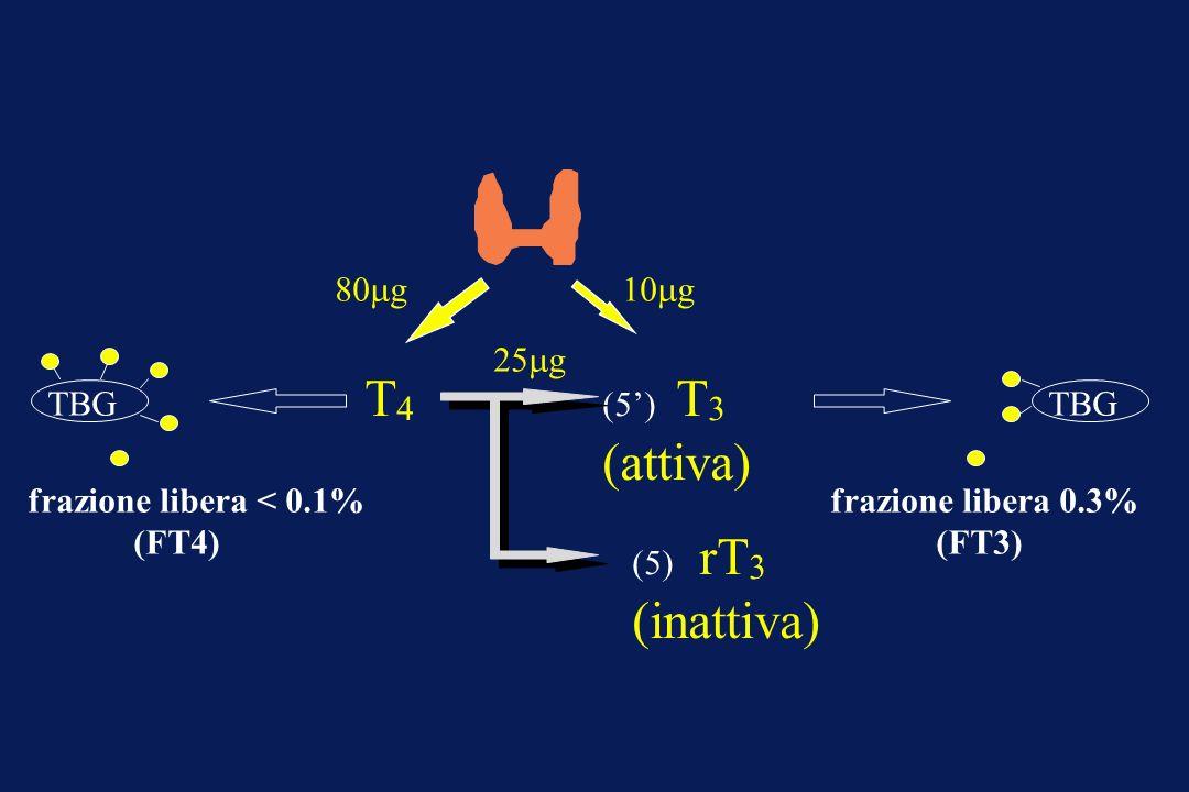 T 4 (5) T 3 (attiva) 80 g10 g 25 g (5) rT 3 (inattiva) frazione libera 0.3% (FT3) TBG frazione libera < 0.1% (FT4)