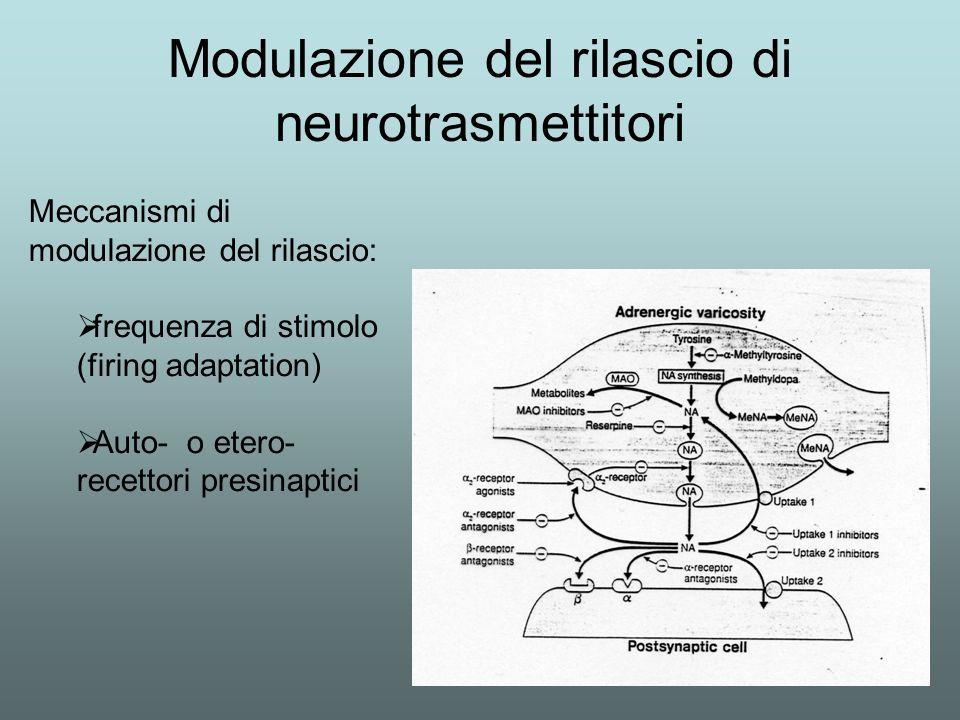 Modulazione del rilascio di neurotrasmettitori Meccanismi di modulazione del rilascio: frequenza di stimolo (firing adaptation) Auto- o etero- recetto