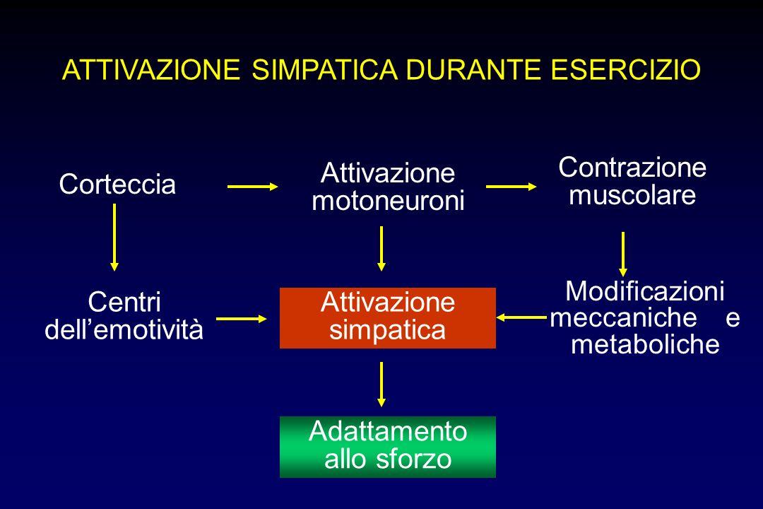 ATTIVAZIONE SIMPATICA DURANTE ESERCIZIO Corteccia Attivazione motoneuroni Contrazione muscolare Adattamento allo sforzo Attivazione simpatica Centri dellemotività Modificazioni meccaniche e metaboliche