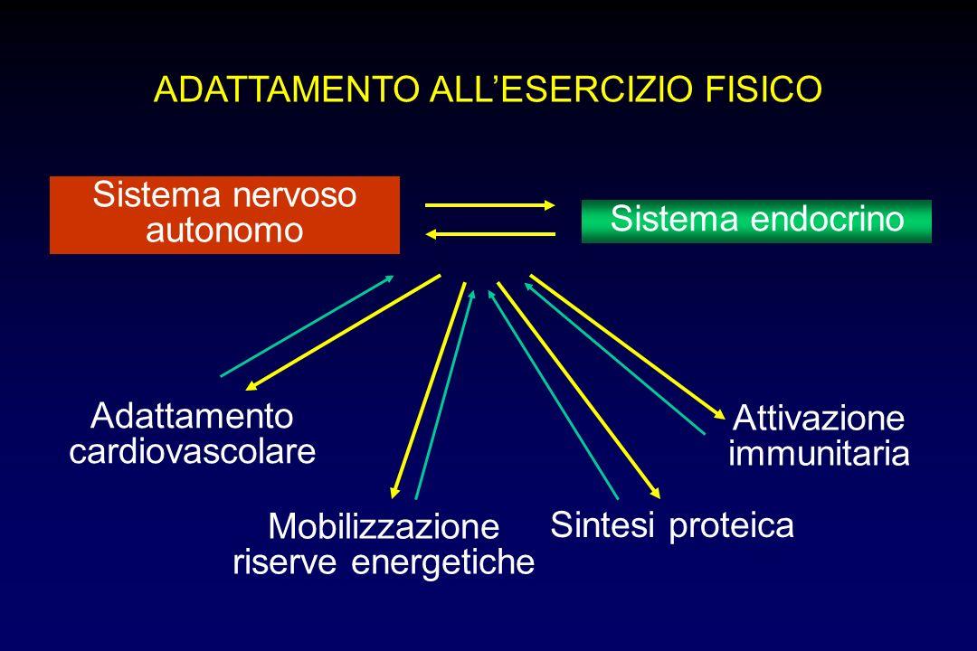 ADATTAMENTO ALLESERCIZIO FISICO Sistema nervoso autonomo Sistema endocrino Adattamento cardiovascolare Mobilizzazione riserve energetiche Sintesi proteica Attivazione immunitaria