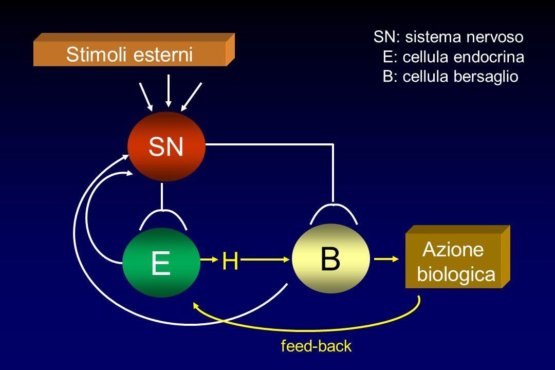Topografia dellazione ormonale H vaso sanguigno a a)autocrina b b)paracrina cellula secernente c c)sistemica (endocrina) H