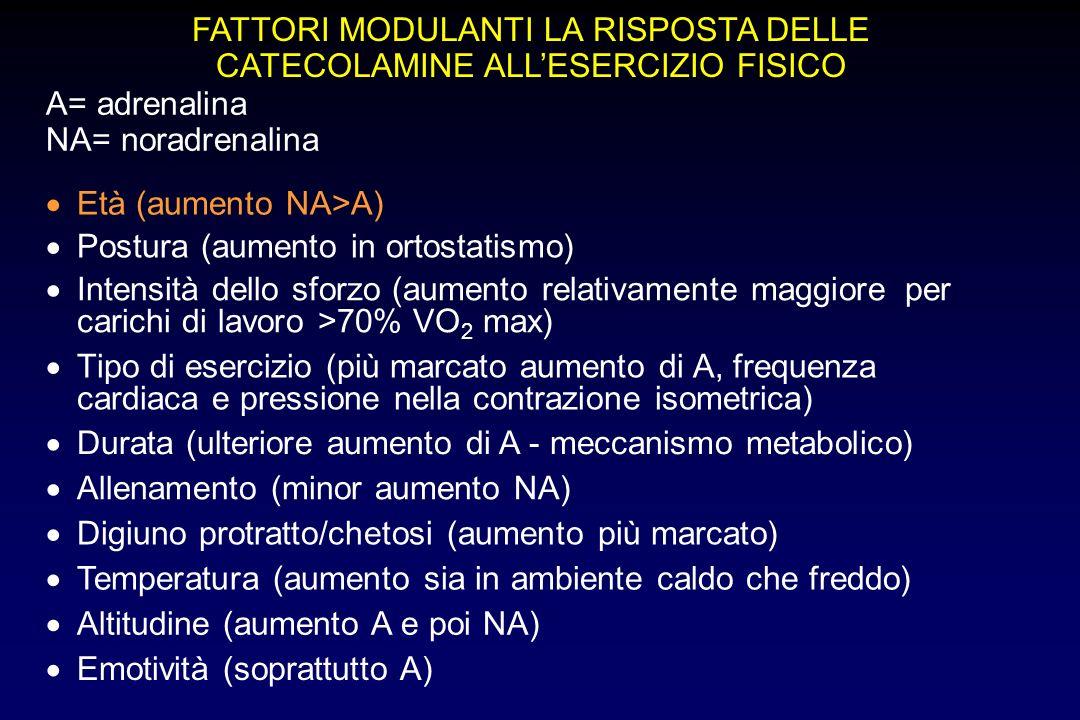 FATTORI MODULANTI LA RISPOSTA DELLE CATECOLAMINE ALLESERCIZIO FISICO Età (aumento NA>A) Postura (aumento in ortostatismo) Intensità dello sforzo (aumento relativamente maggiore per carichi di lavoro >70% VO 2 max) Tipo di esercizio (più marcato aumento di A, frequenza cardiaca e pressione nella contrazione isometrica) Durata (ulteriore aumento di A - meccanismo metabolico) Allenamento (minor aumento NA) Digiuno protratto/chetosi (aumento più marcato) Temperatura (aumento sia in ambiente caldo che freddo) Altitudine (aumento A e poi NA) Emotività (soprattutto A) A= adrenalina NA= noradrenalina