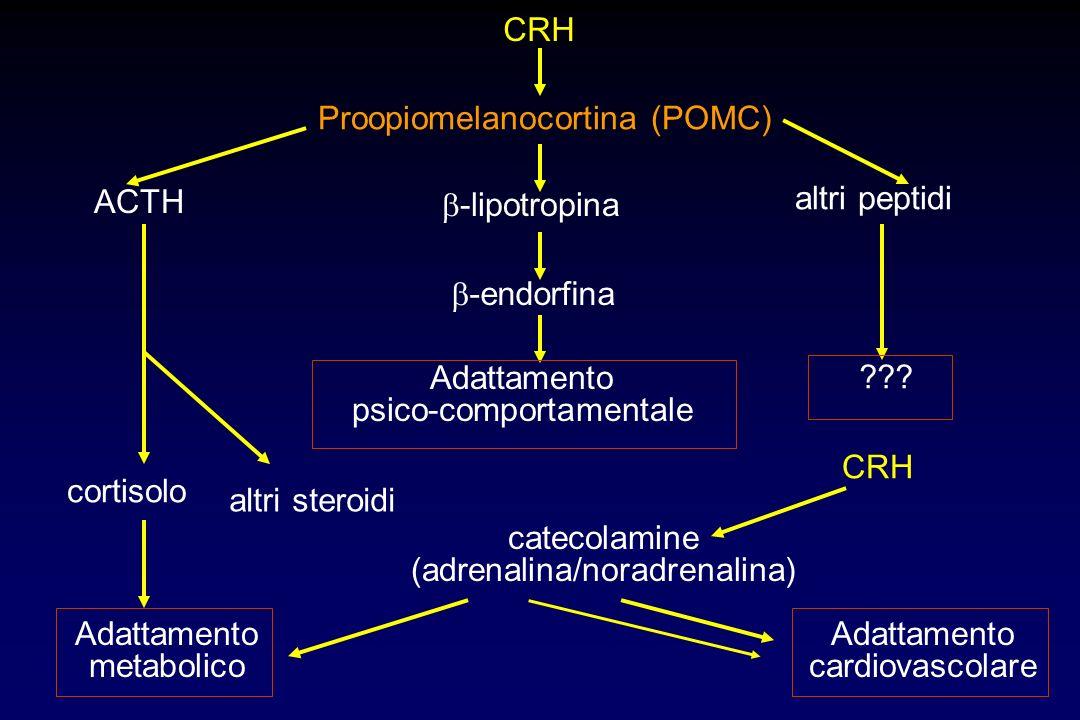 CRH Proopiomelanocortina (POMC) ACTH cortisolo Adattamento metabolico altri steroidi altri peptidi ??? -lipotropina -endorfina Adattamento psico-compo
