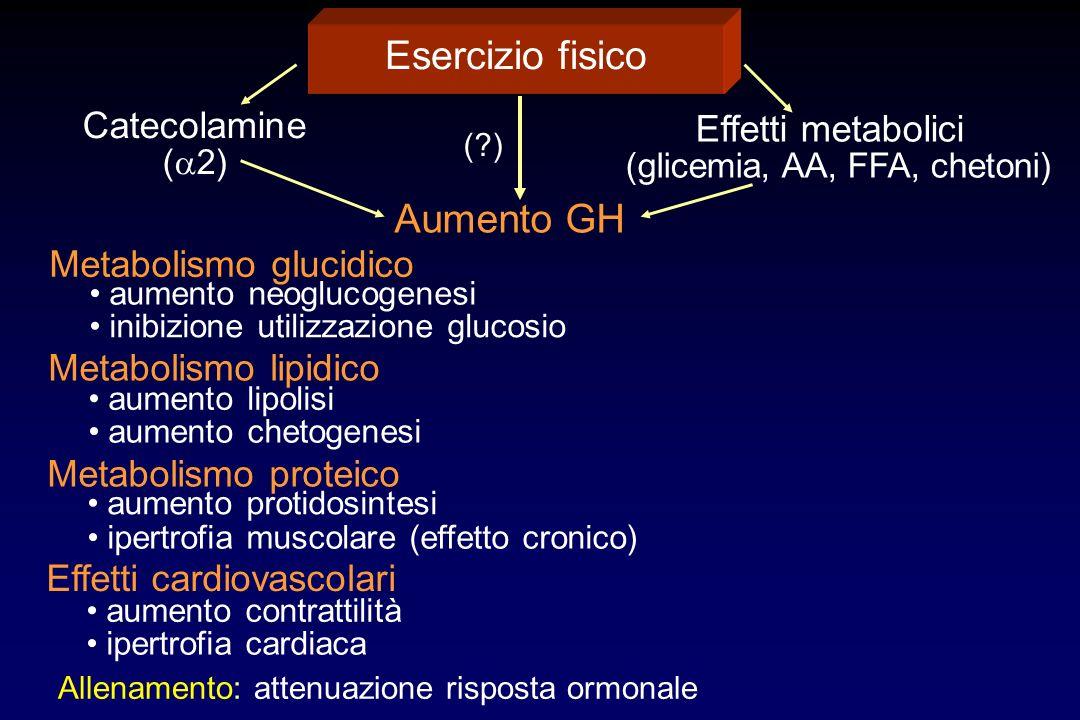Esercizio fisico Catecolamine ( 2) Effetti metabolici (glicemia, AA, FFA, chetoni) Aumento GH Metabolismo glucidico aumento neoglucogenesi inibizione utilizzazione glucosio Metabolismo lipidico aumento lipolisi aumento chetogenesi Metabolismo proteico aumento protidosintesi ipertrofia muscolare (effetto cronico) Effetti cardiovascolari aumento contrattilità ipertrofia cardiaca Allenamento: attenuazione risposta ormonale (?)