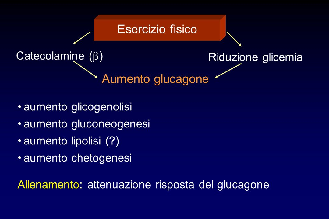 Esercizio fisico Catecolamine ( ) Riduzione glicemia Aumento glucagone aumento glicogenolisi aumento gluconeogenesi aumento lipolisi (?) aumento cheto