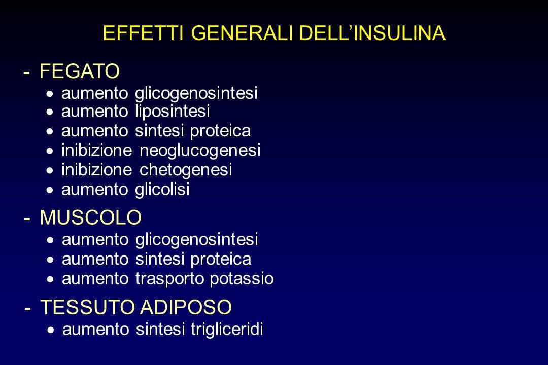 EFFETTI GENERALI DELLINSULINA -FEGATO aumento glicogenosintesi aumento liposintesi aumento sintesi proteica inibizione neoglucogenesi inibizione cheto