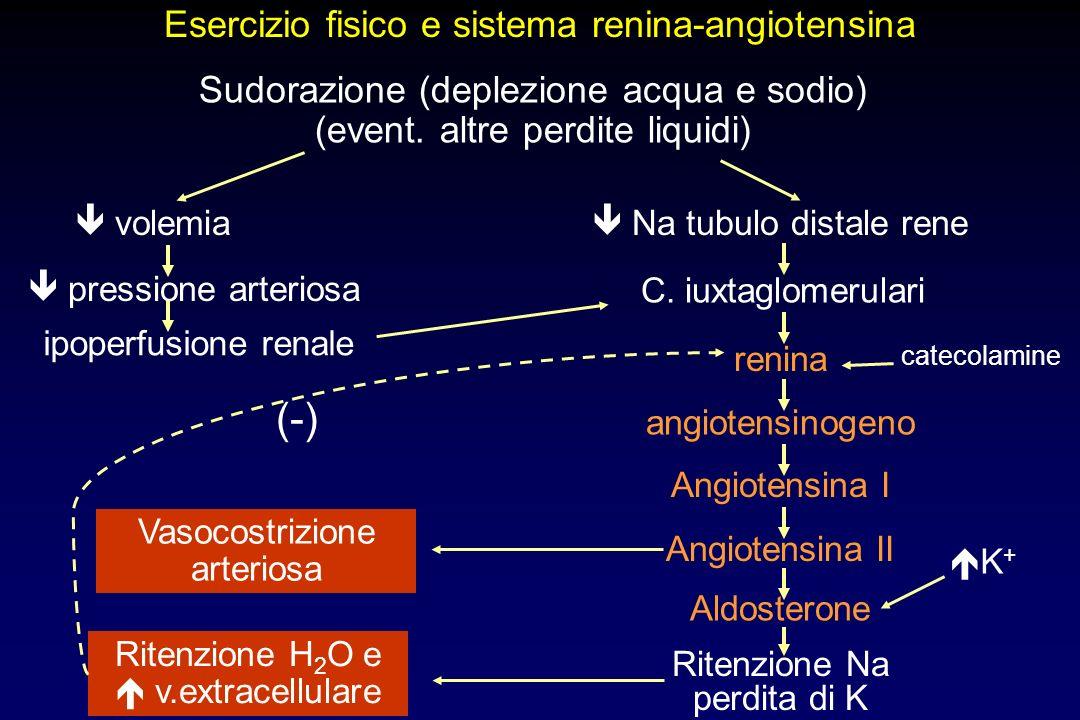 Esercizio fisico e sistema renina-angiotensina Sudorazione (deplezione acqua e sodio) (event. altre perdite liquidi) angiotensinogeno Angiotensina I A