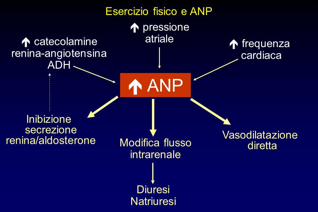 Esercizio fisico e ANP ANP catecolamine renina-angiotensina ADH pressione atriale frequenza cardiaca Inibizione secrezione renina/aldosterone Vasodila
