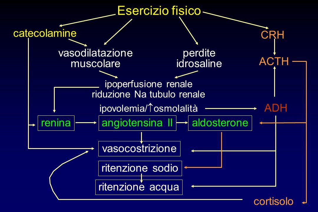 Esercizio fisico catecolamine ADH ipovolemia/ osmolalità renina ipoperfusione renale riduzione Na tubulo renale CRH ACTH cortisolo vasocostrizione angiotensina IIaldosterone ritenzione sodio ritenzione acqua vasodilatazione muscolare perdite idrosaline