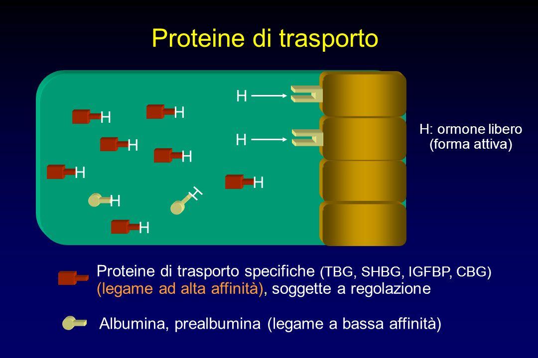 CRH Proopiomelanocortina (POMC) ACTH cortisolo Adattamento metabolico altri steroidi altri peptidi ??.