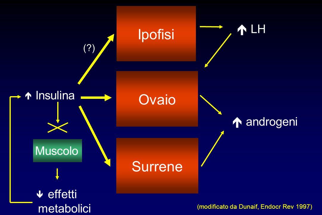 Muscolo Insulina androgeni LH (modificato da Dunaif, Endocr Rev 1997) Ipofisi Ovaio Surrene (?) effetti metabolici