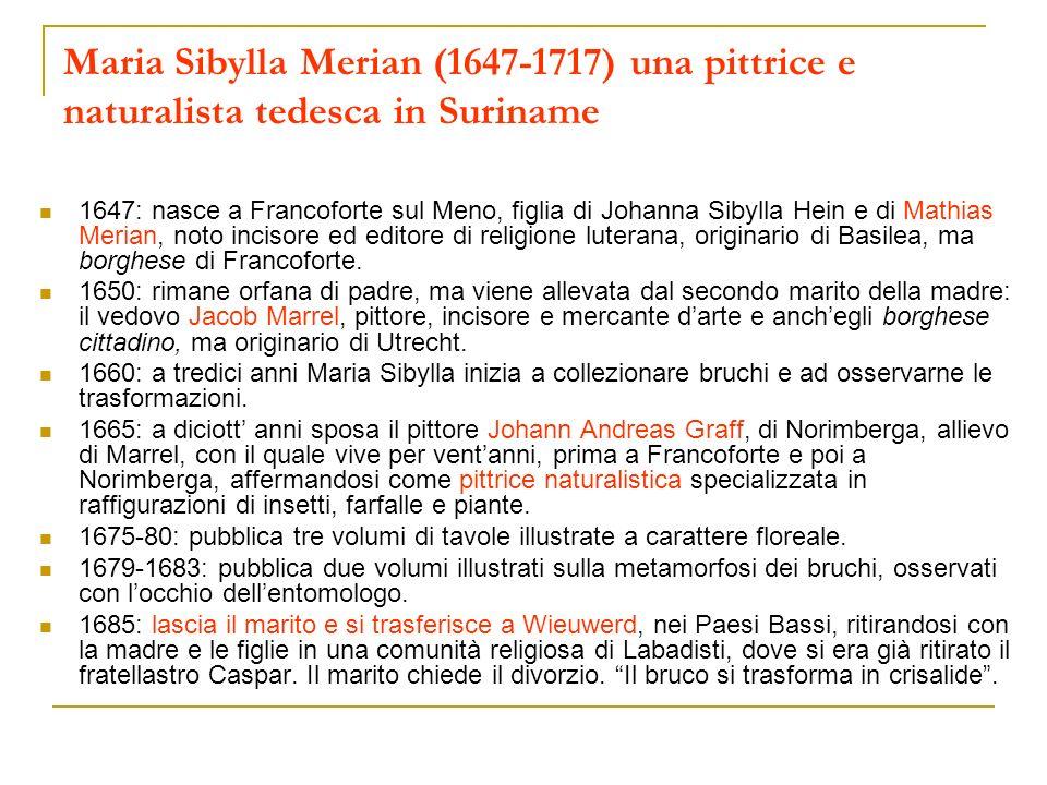Maria Sibylla Merian (1647-1717) una pittrice e naturalista tedesca in Suriname 1647: nasce a Francoforte sul Meno, figlia di Johanna Sibylla Hein e d