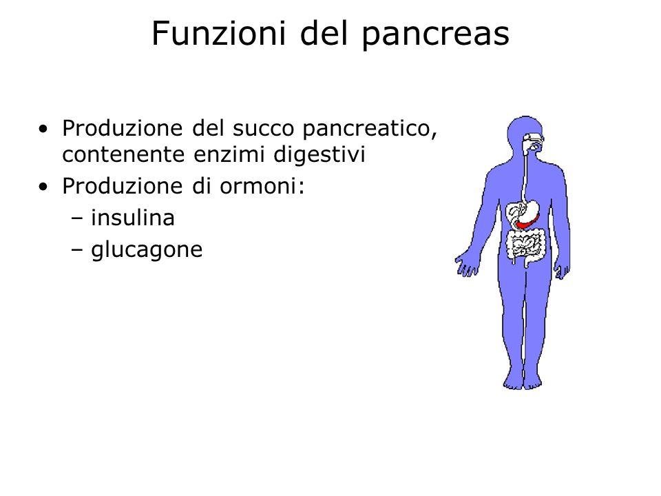 Funzioni del pancreas Produzione del succo pancreatico, contenente enzimi digestivi Produzione di ormoni: –insulina –glucagone