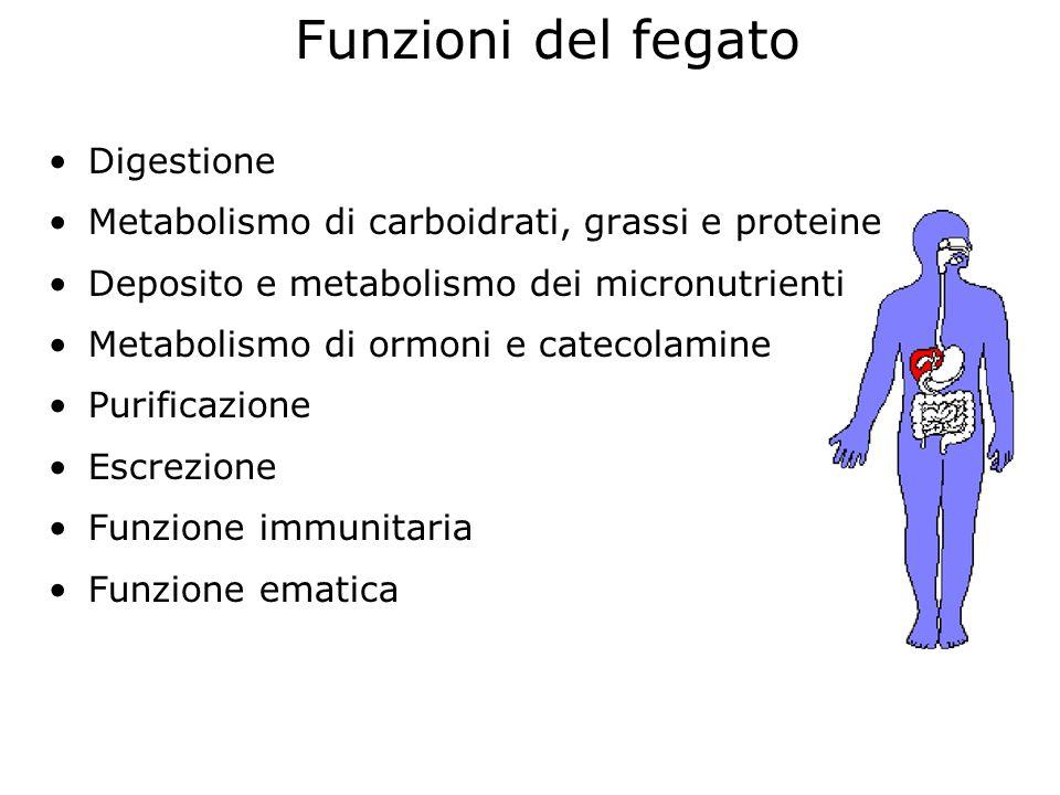 Funzioni del fegato Digestione Metabolismo di carboidrati, grassi e proteine Deposito e metabolismo dei micronutrienti Metabolismo di ormoni e catecol
