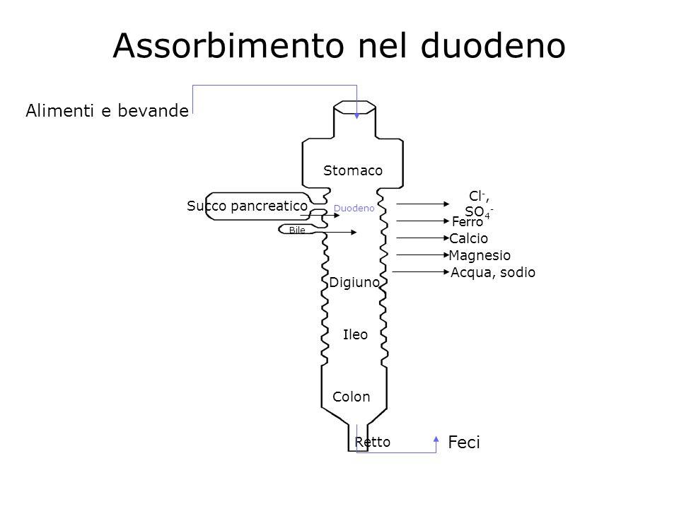 Assorbimento nel duodeno Stomaco Succo pancreatico Alimenti e bevande Bile Duodeno Cl -, SO 4 - Ferro Calcio Magnesio Digiuno Ileo Colon Retto Feci Ac