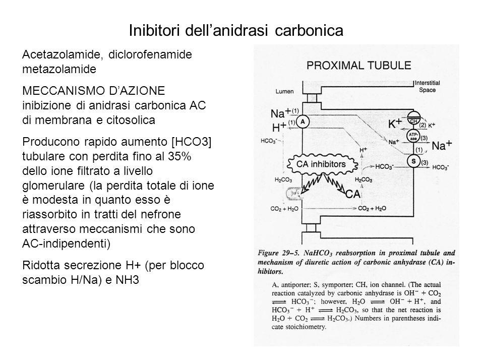 Inibitori dellanidrasi carbonica Acetazolamide, diclorofenamide metazolamide MECCANISMO DAZIONE inibizione di anidrasi carbonica AC di membrana e cito