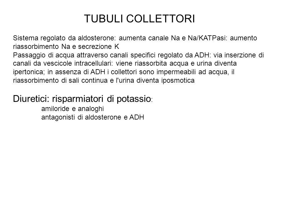 TUBULI COLLETTORI Sistema regolato da aldosterone: aumenta canale Na e Na/KATPasi: aumento riassorbimento Na e secrezione K Passaggio di acqua attrave