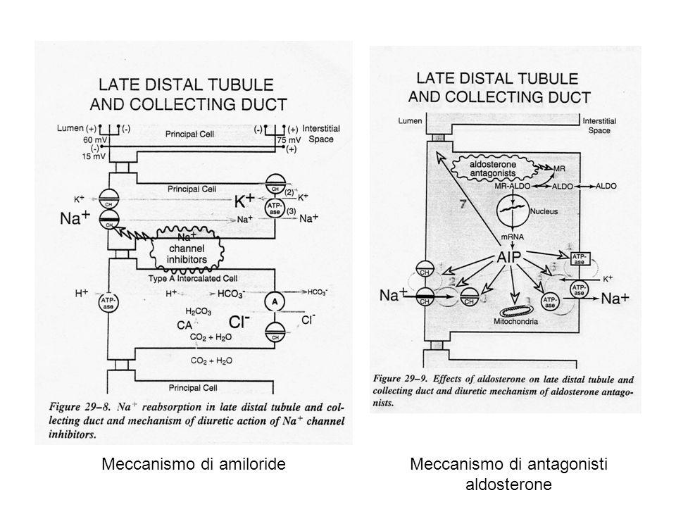 Meccanismo di amilorideMeccanismo di antagonisti aldosterone