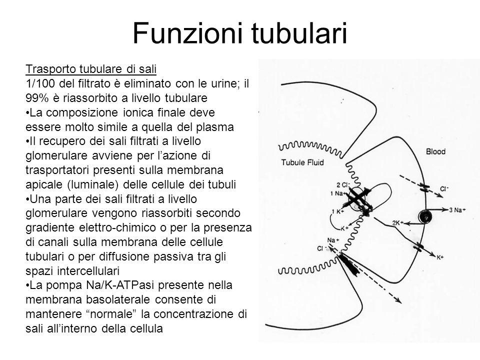 Funzioni tubulari Trasporto tubulare di sali 1/100 del filtrato è eliminato con le urine; il 99% è riassorbito a livello tubulare La composizione ioni