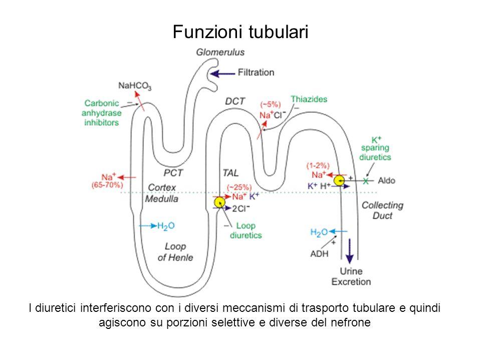 Funzioni tubulari I diuretici interferiscono con i diversi meccanismi di trasporto tubulare e quindi agiscono su porzioni selettive e diverse del nefr