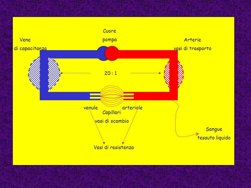 arteriolevenule Vasi di resistenza Capillari vasi di scambio Arterie vasi di trasporto Vene vasi di capacitanza Sangue tessuto liquido Cuore pompa 20 : 1
