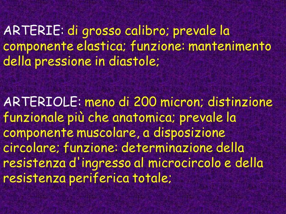 ARTERIE: di grosso calibro; prevale la componente elastica; funzione: mantenimento della pressione in diastole; ARTERIOLE: meno di 200 micron; distinz