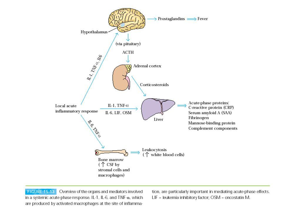Figura 13.17 - Circuiti di regolazione negativa delle citochine primarie dell infiammazione.