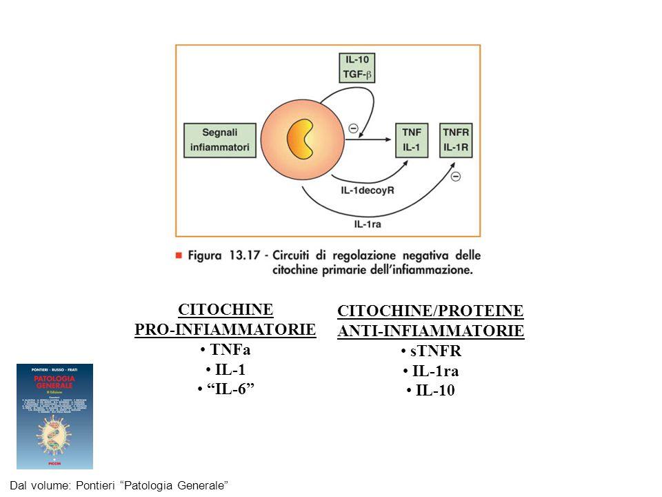 La prima citochina prodotta in risposta allesercizio fisico, in assenza di danno muscolare, è IL-6, i cui livelli aumentano in modo esponenziale fino a 100 volte.