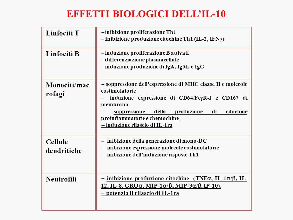 EFFETTI BIOLOGICI DELLIL-10 Linfociti T inibizione proliferazione Th1 Inibizione produzione citochine Th1 (IL-2, IFN ) Linfociti B induzione proliferazione B attivati differenziazione plasmacellule induzione produzione di IgA, IgM, e IgG Monociti/mac rofagi soppressione dellespressione di MHC claase II e molecole costimolatorie induzione expressione di CD64/Fc R-I e CD167 di membrana soppressione della produzione di citochine proinfiammatorie e chemochine induzione rilascio di IL-1ra Cellule dendritiche inibizione della generazione di mono-DC inibizione espressione molecole costimolatorie inibizione dellinduzione risposte Th1 Neutrofili inibizione produzione citochine (TNF, IL-1 /, IL- 12, IL-8, GRO, MIP-1 / MIP-3 /, IP-10).