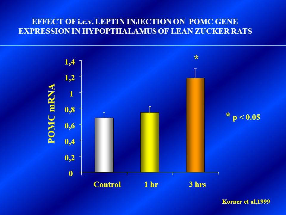 0 0,2 0,4 0,6 0,8 1 1,2 1,4 Control1 hr3 hrs EFFECT OF i.c.v. LEPTIN INJECTION ON POMC GENE EXPRESSION IN HYPOPTHALAMUS OF LEAN ZUCKER RATS * p < 0.05