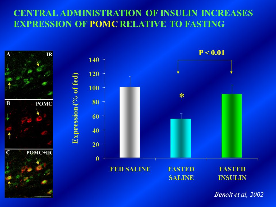 0 20 40 60 80 100 120 140 FED SALINEFASTED SALINE FASTED INSULIN Expression (% of fed) CENTRAL ADMINISTRATION OF INSULIN INCREASES EXPRESSION OF POMC RELATIVE TO FASTING Benoit et al, 2002 * P < 0.01