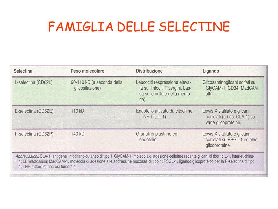 FAMIGLIA DELLE SELECTINE