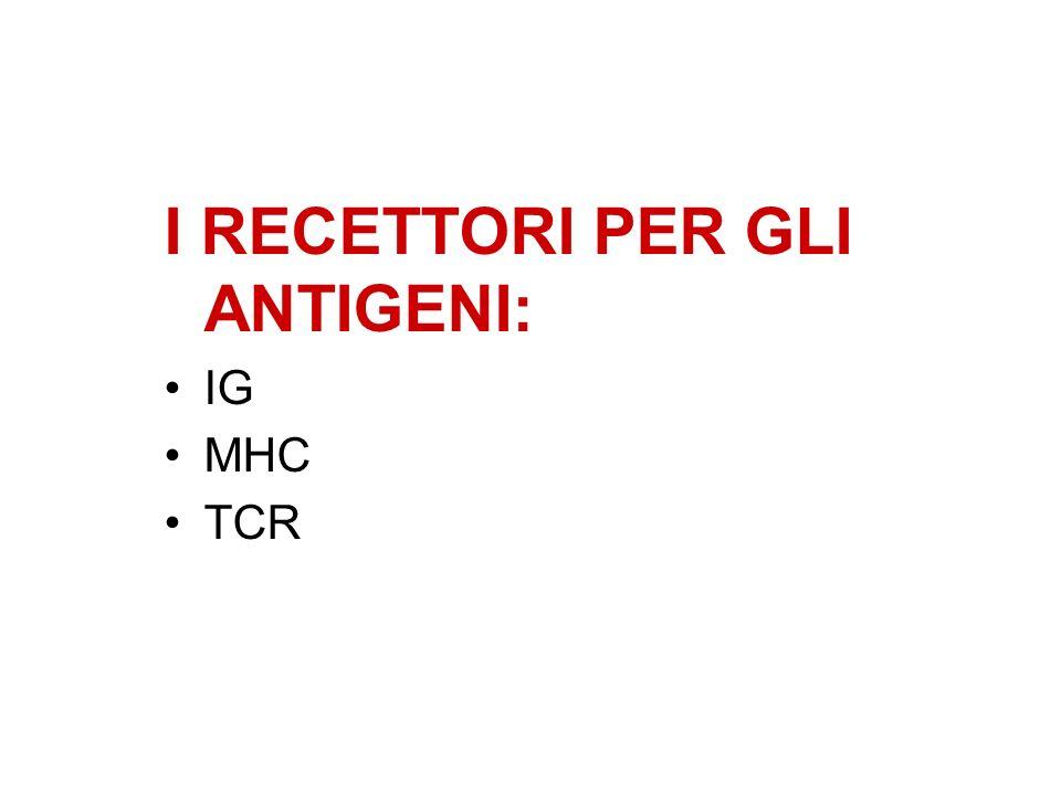 I RECETTORI PER GLI ANTIGENI: IG MHC TCR