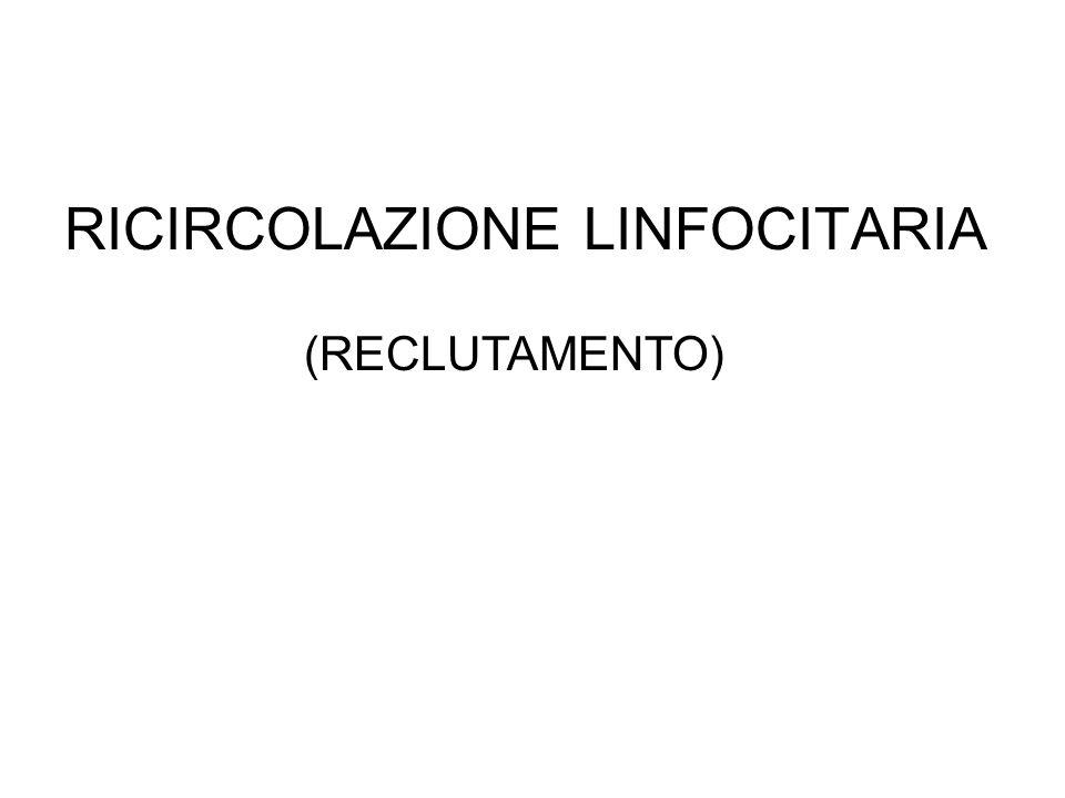RICIRCOLAZIONE LINFOCITARIA (RECLUTAMENTO)