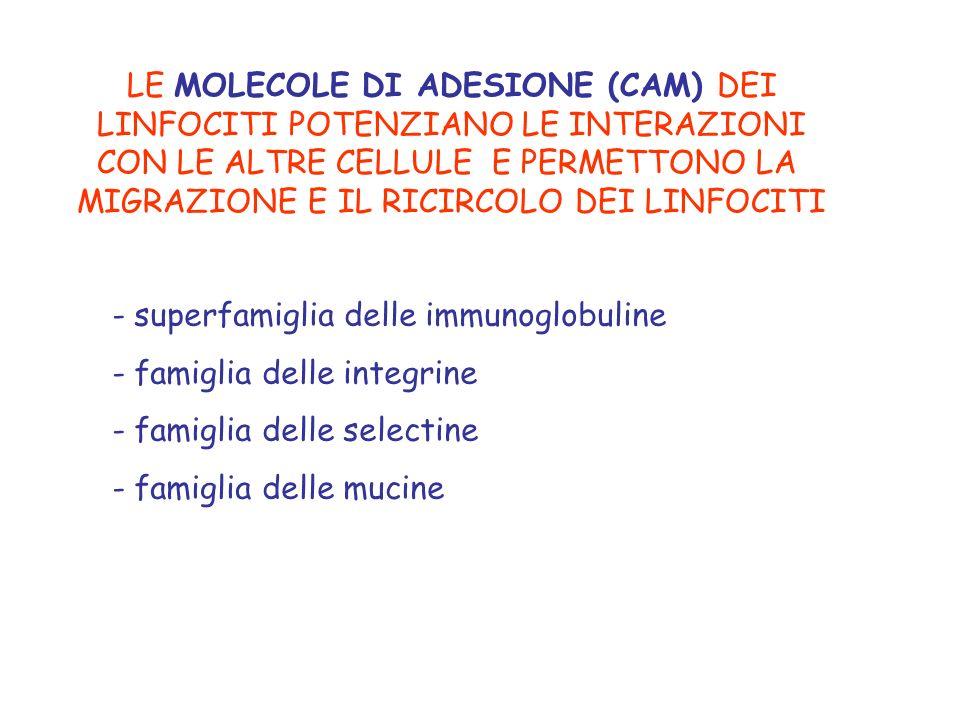 MOLECOLE DI ADESIONE (CAM= Cell Adhesion Molecule)