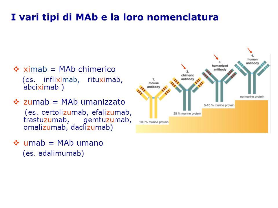 MAb per il trattamento di patologie infiammatorie/immuno-mediate Nome del MAb Specialità medicinale Antigene/ Bersaglio Principali usi clinici Adalimumab Humira, Abbott TNF- AR, artrite psoriasica, morbo di Crohn Efalizumab Raptiva, Serono CD11a 1 Psoriasi moderata-grave Infliximab Remicade, Schering Plough TNF- AR, artrite psoriasica, psoriasi, morbo di Crohn, colite ulcerativa, spondilite anchilosante Natalizumab 2 Tysabri®, Biogen Dompè Integrina 4β1 (VLA-4) Sclerosi multipla, morbo di Crohn OmalizumabXolair®, Novartis IgE circolantiAsma allergica (pazienti adolescenti e adulti) AR, artrite reumatoide 1 CD11a, subunità dellantigene-1 funzione-associato dei linfociti T (LFA-1), sui linfociti T.