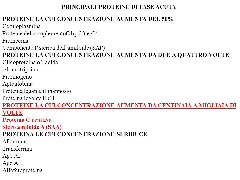 PRINCIPALI PROTEINE DI FASE ACUTA PROTEINE LA CUI CONCENTRAZIONE AUMENTA DEL 50% Ceruloplasmina Proteine del complementoC1q, C3 e C4 Fibrnecina Compon