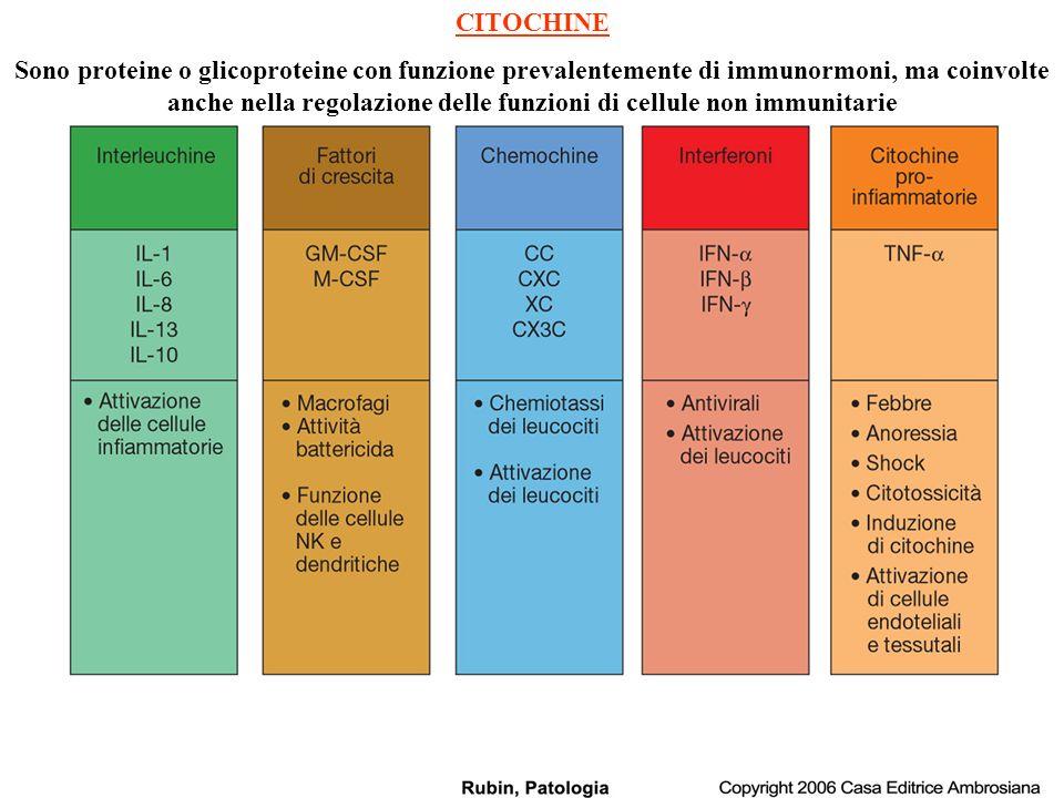 RISPOSTE CELLLULARI NESSUNA RISPOSTA IL-1 IL-1RI IL-1RAcP IL-1RII (Decoy Receptor) sIL-1R IL-1ra